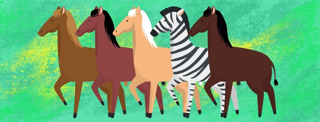 A line of horses with one zebra